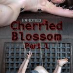 HardTied presents Blossom in Cherried Blossom Part 1 – 15.02.2017
